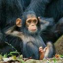MonkeyD.Ruffy