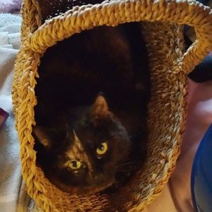 Great basket, endorsement by Piggle the cat. @maisonbengal # – FoyersPhotography
