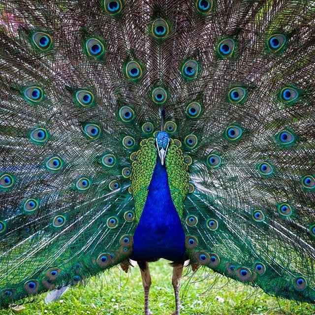 A vistor to our garden