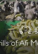 Poster of The Drills of Afi Mountain