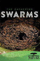 Poster of Nature: The Gathering Swarms