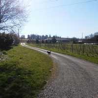 image 13 thumbnail