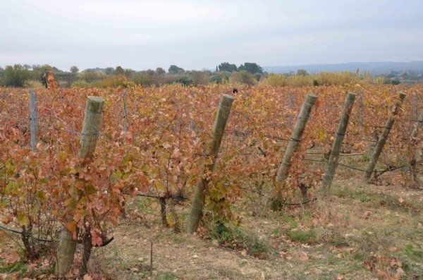 Beziers,Languedoc-Roussillon,34500,Vineyard,10765-GAL3700000E