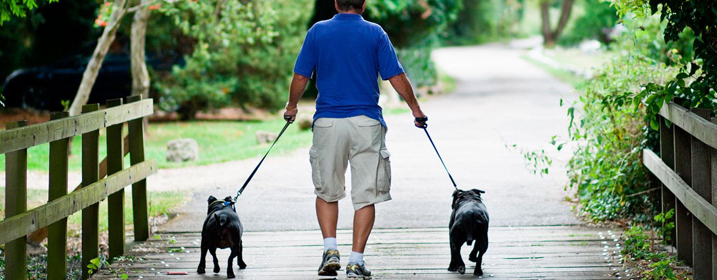 Kuva_liikunta mies ja koirat