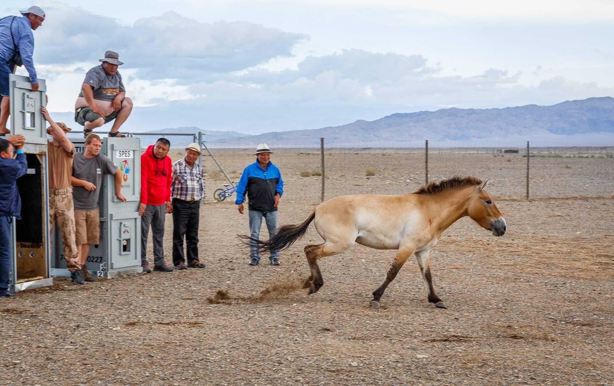 Hevoslaatikko