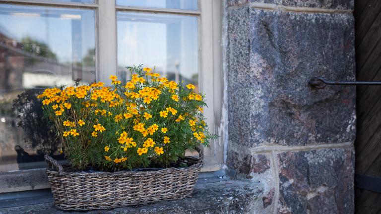 Kuva kesäkukista Valimon ikkunalaudalla