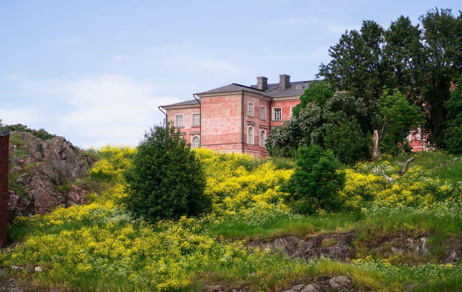 Kuvassa vaaleanpunainen vaasankasarmi -rakennus, jonka edustalla rinne, jossa keltaista ukonpalko kasvillisuutta
