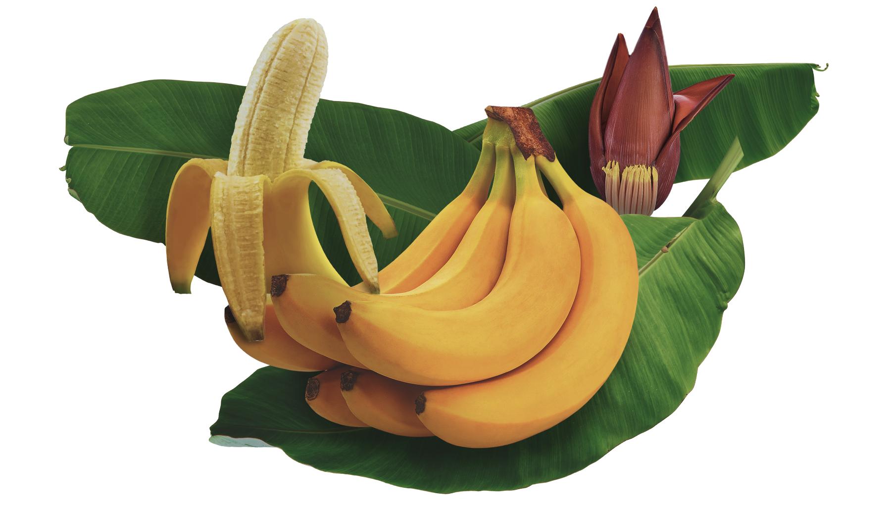 Come Coltivare Un Banano banana: storia, proprietà nutrizionali e benefici - fratelli