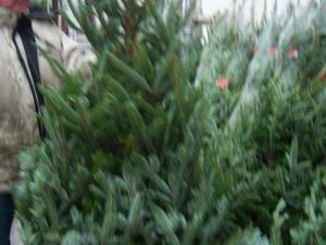 christmas trees for sale buy real christmas trees belfast northern