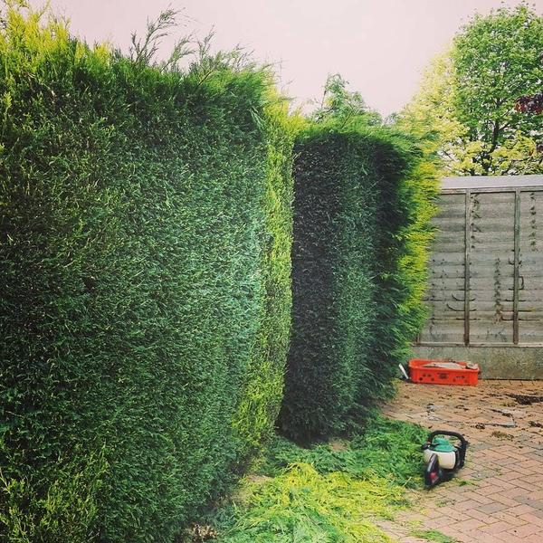 Local garden maintenance available bedworth friday ad for Local landscape gardeners