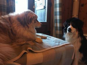 Pet sitter in CHAMONIX FRANCE - Yarm | Friday-Ad