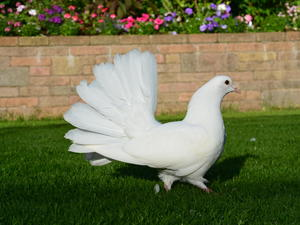 White Birds for Sale | Friday Ad