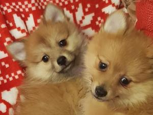 Puppies & Dogs for Sale in Twickenham - Buy a puppy near you