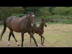 Horses for Sale in Ivinghoe | Friday-Ad