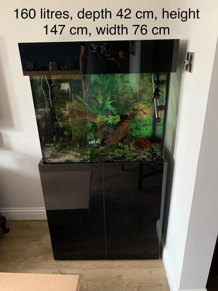 fish tank and fish setup fishtank aquaristic aquarium in hassocks