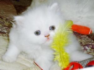 Cats & Kittens for Sale in Burghfield Common | Friday-Ad