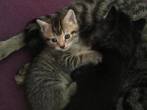50bf8e4d5e39a6 2 kittens for sale in Luton - Sold