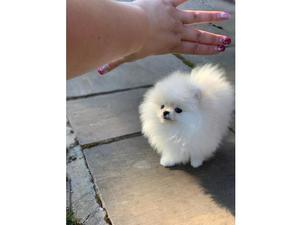 Puppies & Dogs for Sale in Limehouse, London - Buy a puppy