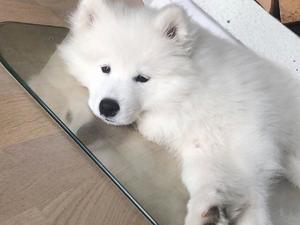 Puppies & Dogs for Sale in Sutton Coldfield - Buy a puppy