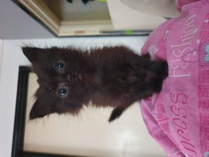 Cats Kittens For Sale In Alresford Friday Ad