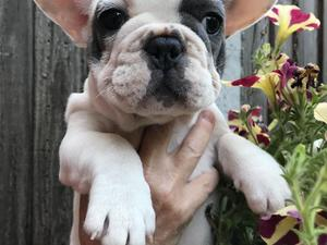 Puppies & Dogs for Sale in Hastings - Buy a puppy near you | Friday-Ad