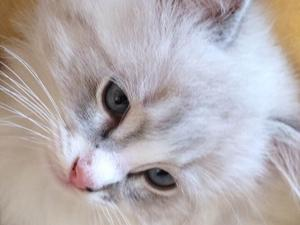Cats & Kittens for Sale in Hartlepool | Friday-Ad