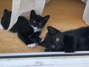 Cats & Kittens for Sale in Harlow | Friday-Ad