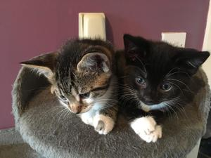 Cats & Kittens for Sale in Bolton | Friday-Ad