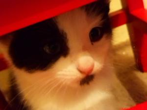 Cats & Kittens for Sale in Eastbourne | Friday-Ad