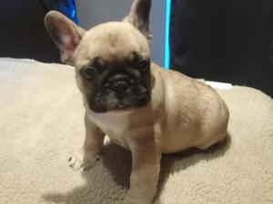 Puppies Dogs For Sale In Grimsby Buy A Puppy Near You Friday Ad