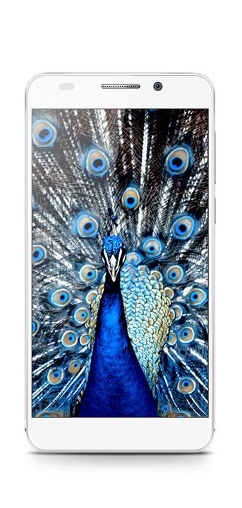 HONOR - nowa marka smartfonów