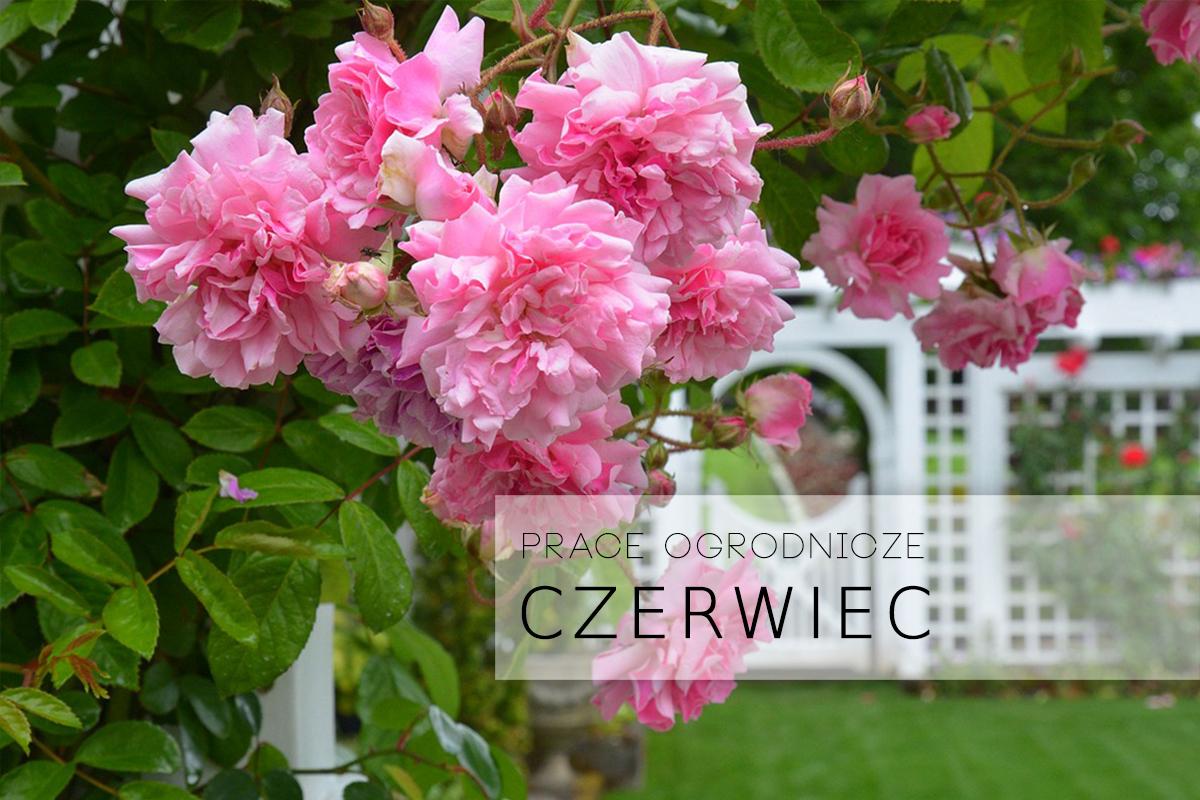 Prace ogrodnicze: CZERWIEC