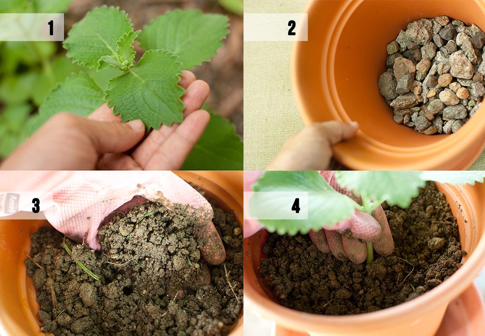 Etapy sadzenia ziół do donic