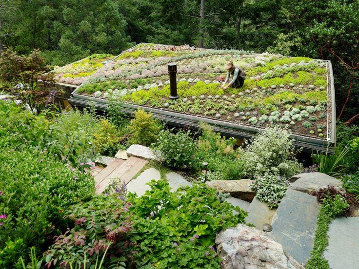 Projekty ogrodów na dachach-Dachy zielone-Warszawa, Płock,Płońsk