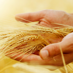 Avoiding Gluten Is Not as Easy as You May Think | Wellness magzine