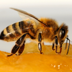 The Nutritious Bee Hive { part 1} | Wellness magazine