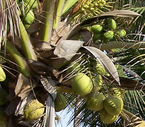 Skinny Coconut Oil? Is it possible?