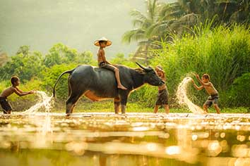 The boys friend happy funny playing water and animal buffalo water on river