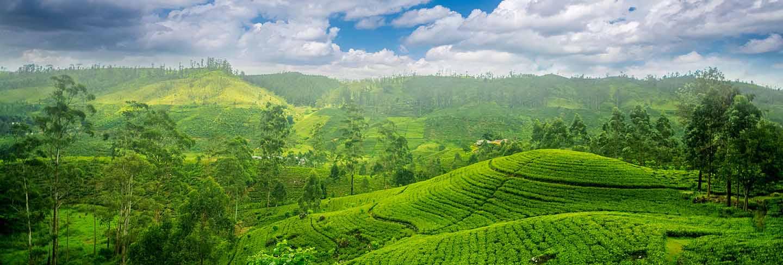Sri lanka tea estates at nuwara eliya