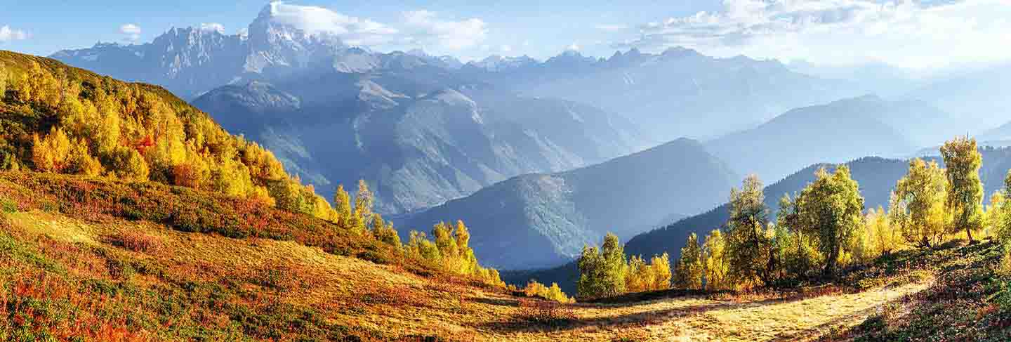 Fantastic forest in carpathian ukraine. there comes a golden autumn in the valleys