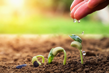 Hand of farmer watering to small beans in garden