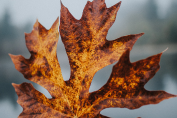 Beautiful closeup shot of a golden large autumn leaf with a blurred natural background
