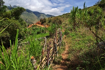 The tracking in valley of wamena, papua,