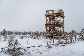 Snowy winter day at swamp. small swamp trees and watchtower.