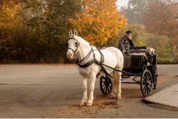 White horse with carriage, waiting for some tourists outside the red gate to jaegersborg dyrehave close to copenhagen