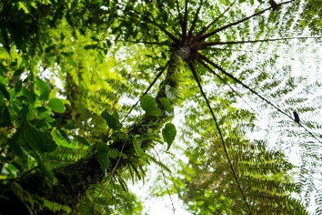 Low angle view of tree in tropical rainforest at costa rica