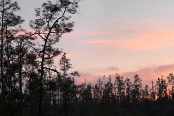 Mountain pine ridge reserve, tropical rainforest