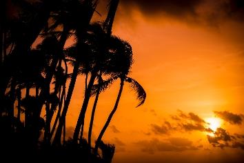 Sunrise with palms