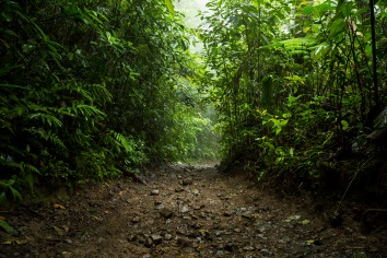 Pathway in rainforest during rainy season at costa rica