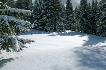 Trees woods winter ice nature snow france forest